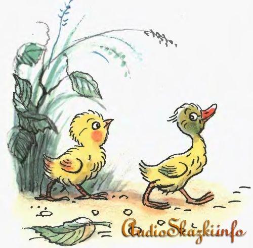 Цыпленок и Утенок