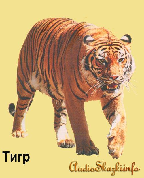 Развивающие картинки. Тигр