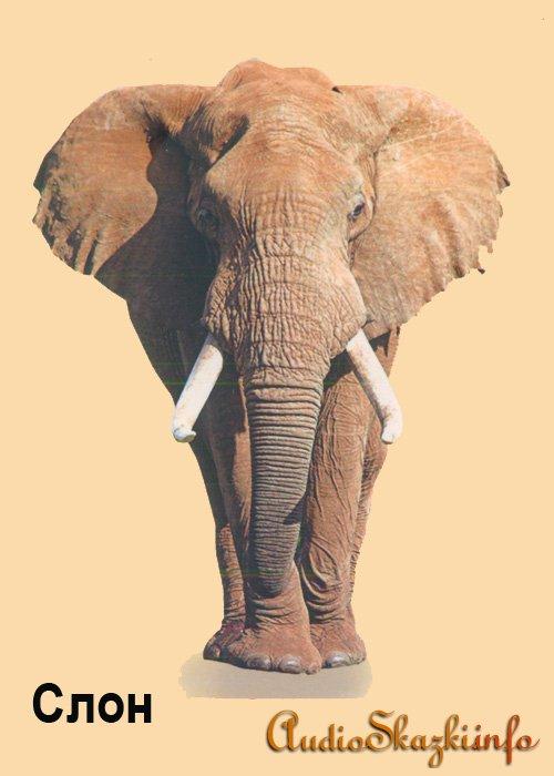 Развивающие картинки. Слон