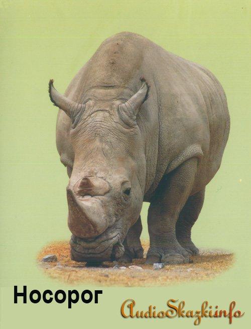 Развивающие картинки. Носорог