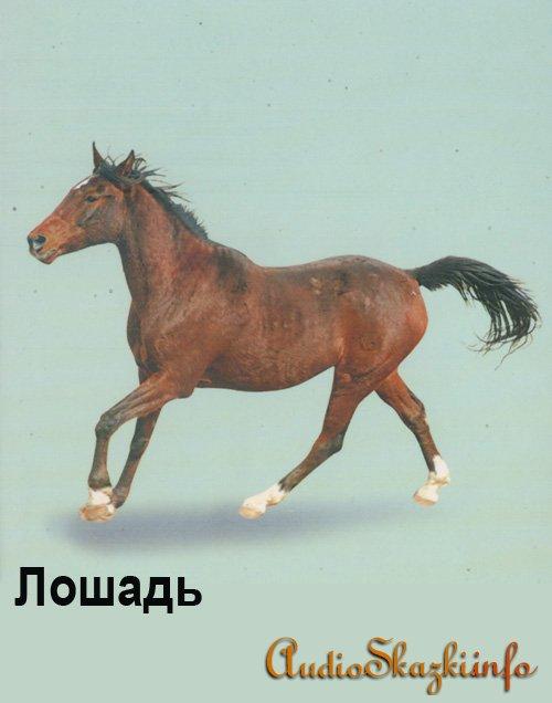 Развивающие картинки. Лошадь