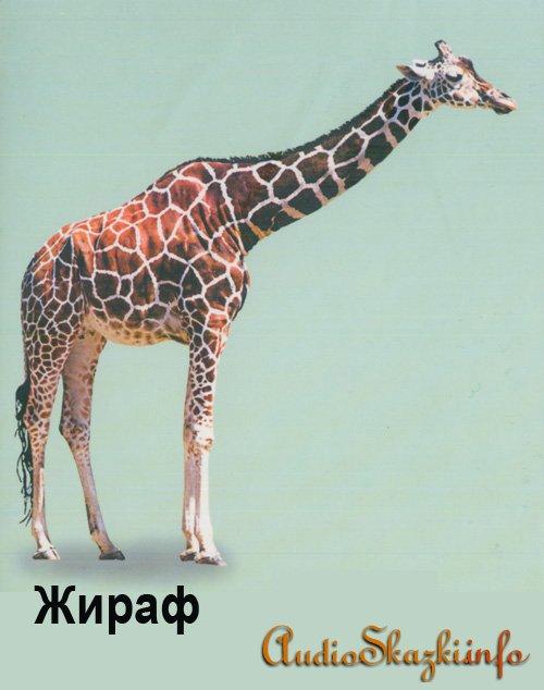 Развивающие картинки. Жираф