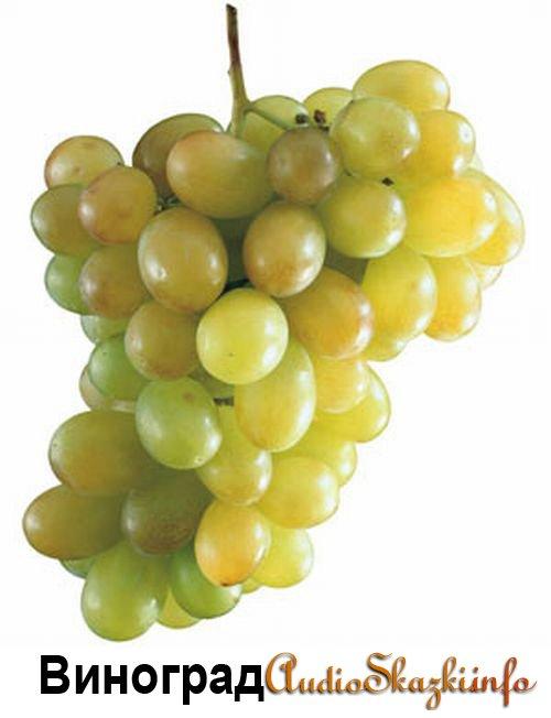 Развивающие картинки. Виноград