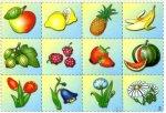 Подбери картинку. Растительный и животный мир