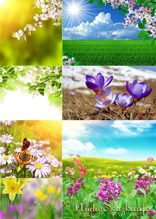 Растровый клипарт - Весенне-летние цветочные фоны