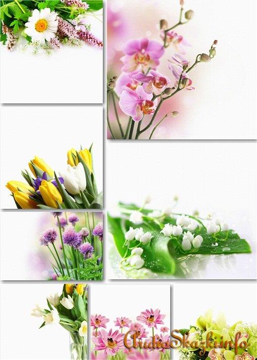 Растровые фоны - Цветочные букеты на белом